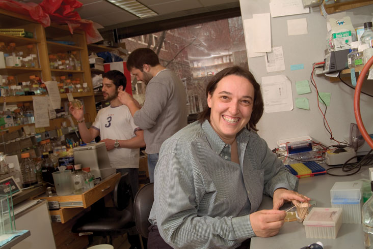 Assoc. Prof. Angelika Amon studies growth in yeast — work highly relevant to combating cancer. Photo: Ed Quinn