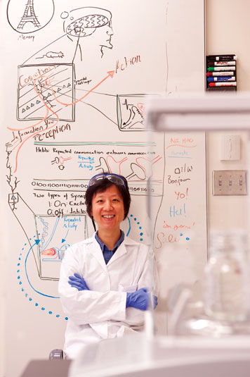 Prof. Yingxi Lin is pioneering research on inhibitory circuitry. Photo: Len Rubenstein