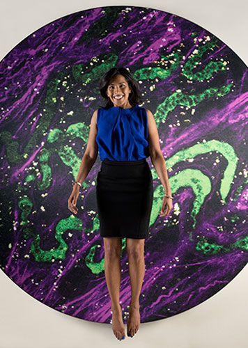 Sangeeta Bhatia's research draws on biological and medical sciences, and engineering. Photo illustration: Len Rubenstein