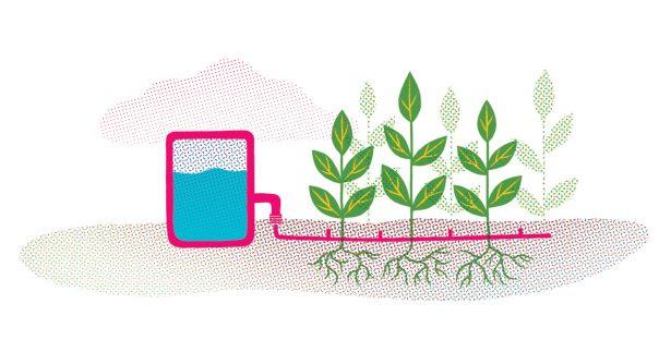 illustration of plant irrigation system
