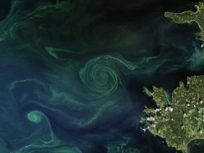 Phytoplankton swirls reveal underlying currents, eddies, and flows in the ocean. Small-scale turbulent processes like these are crucial to the new climate model. Photo: NASA Earth Observatory