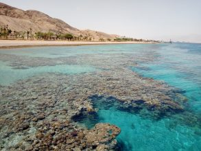 Mallory Ringham visited this Red Sea coral reef to study calcium carbonate precipitation, a process that may play a role in carbon cycling. Photo: Mallory Ringham