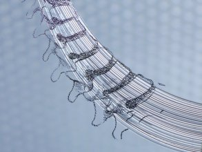 Illustration of human spine courtesy of MIT Bioelectronics Group, led by Polina Anikeeva.